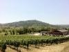 Blick nach Montalcino
